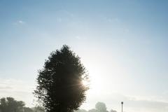 morningmistSiegpathweb